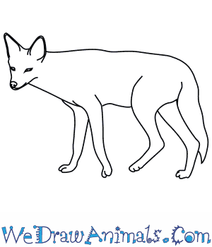 How to Draw a Black Backed Jackal in 8 Easy Steps