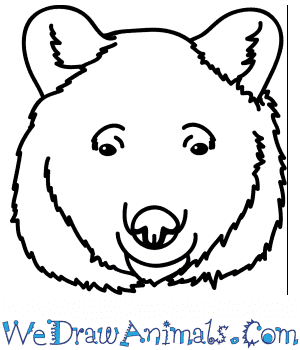 How to Draw a Black Bear Face in 5 Easy Steps