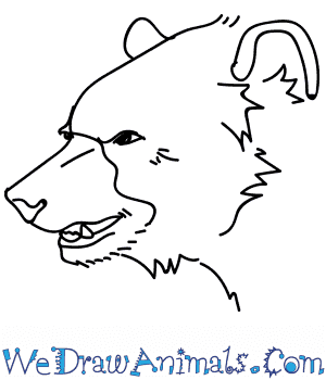 How to Draw a Black Bear Head in 12 Easy Steps