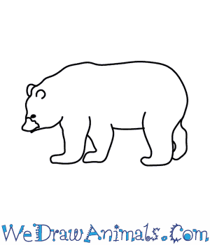 How to Draw a Black Bear in 8 Easy Steps