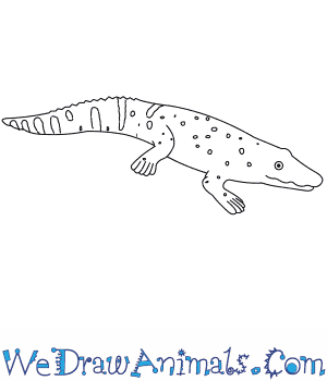 How to Draw a Black Caiman in 7 Easy Steps