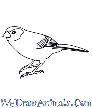 How to Draw a Black Cheeked Waxbill in 7 Easy Steps