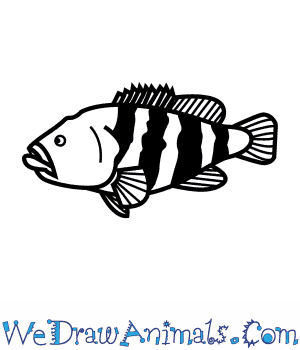 How to Draw a Black Cod in 7 Easy Steps