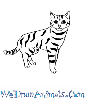 How to Draw a Black Footed Cat in 8 Easy Steps