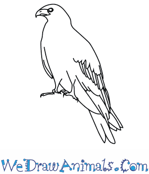 How to Draw a Black Kite in 7 Easy Steps