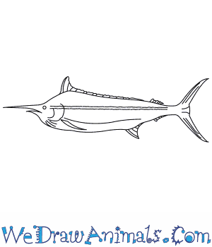 How to Draw a Black Marlin in 7 Easy Steps