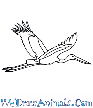 How to Draw a Black Necked Stork in 7 Easy Steps
