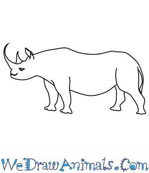 How to Draw a Black Rhinoceros in 8 Easy Steps
