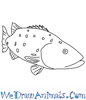 How to Draw a Black Sea Bass in 8 Easy Steps