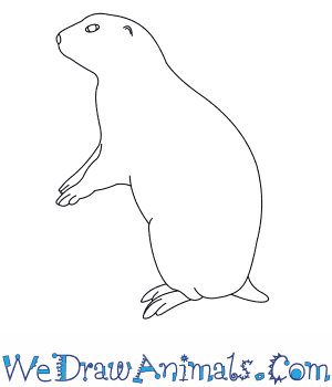 How to Draw a Black Tailed Prairie Dog in 6 Easy Steps