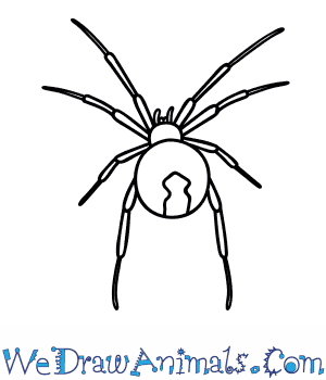 How to Draw a Black Widow Spider in 6 Easy Steps