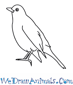 How to Draw a Blackbird in 9 Easy Steps