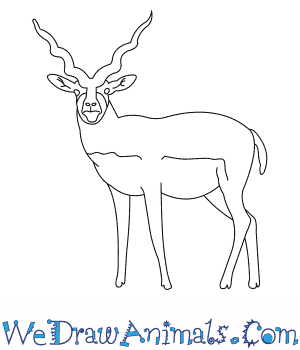 How to Draw a Blackbuck in 6 Easy Steps