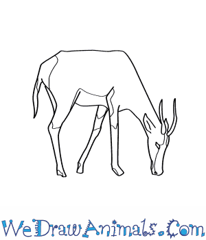 How to Draw a Blesbok in 7 Easy Steps
