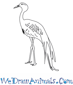 How to Draw a Blue Crane in 6 Easy Steps