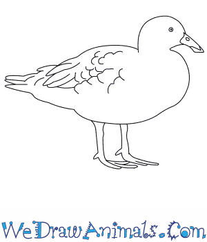 How to Draw a Blue Duck in 8 Easy Steps