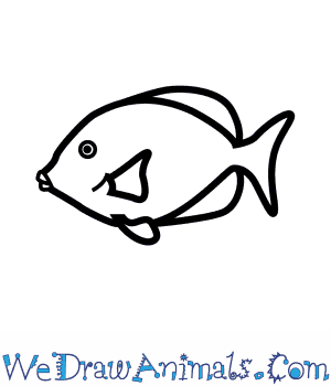 How to Draw a Blue Tang in 4 Easy Steps
