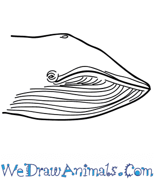 How to Draw a Blue Whale Face in 5 Easy Steps