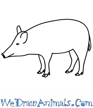 How to Draw a Boar in 7 Easy Steps