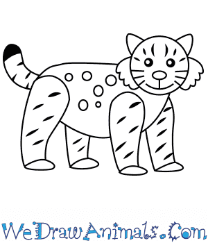How to Draw a Bobcat For Kids in 6 Easy Steps