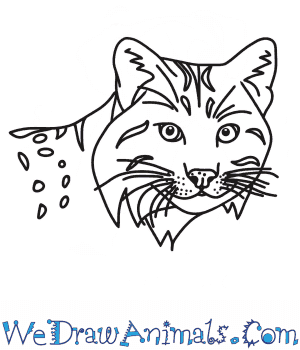 How to Draw a Bobcat Head in 7 Easy Steps