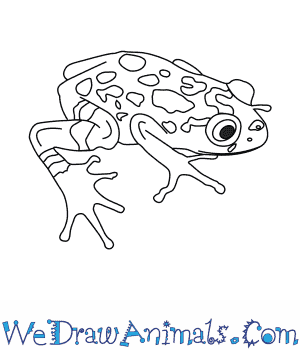 How to Draw a Bobiri Reed Frog in 6 Easy Steps