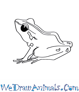 How to Draw a Bobs Robber Frog in 6 Easy Steps