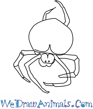 How to Draw a Bolas Spider in 4 Easy Steps