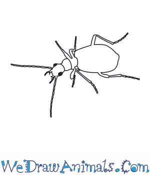 How to Draw a Bombardier Beetle in 6 Easy Steps