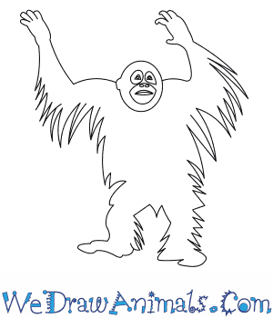 How to Draw a Bornean Orangutan in 7 Easy Steps