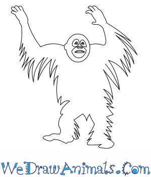 How to Draw a Bornean Orangutan in 7 Easy Steps