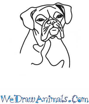 How to Draw a Boxer Dog Head in 7 Easy Steps
