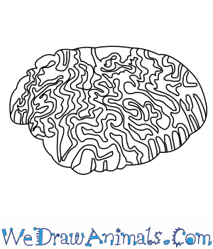 How to Draw a Brain Coral in 7 Easy Steps