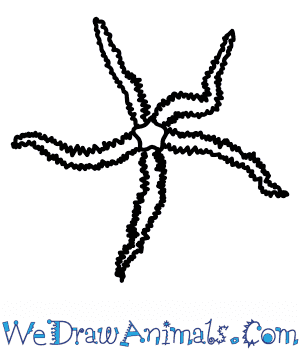 How to Draw a Brittlestar in 6 Easy Steps