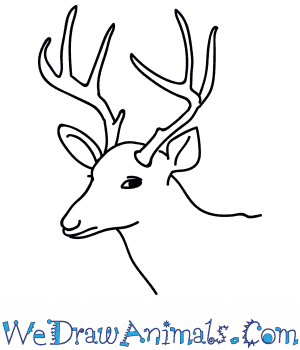 How to Draw a Buck Deer Head in 8 Easy Steps