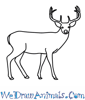 How to Draw a Buck Deer in 9 Easy Steps