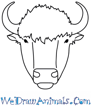 How to Draw a Buffalo Face in 8 Easy Steps