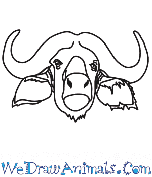 How to Draw a Buffalo Head in 7 Easy Steps