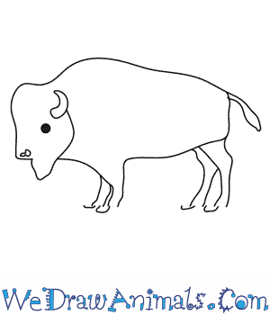 How to Draw a Buffalo in 9 Easy Steps