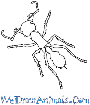 How to Draw a Bullet Ant in 9 Easy Steps