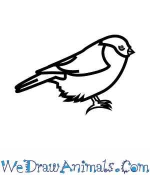 How to Draw a Bullfinch in 5 Easy Steps