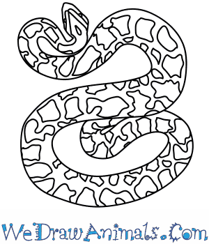How to Draw a Burmese Python in 4 Easy Steps