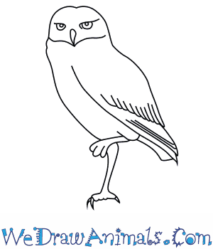 How to Draw a Burrowing Owl in 7 Easy Steps