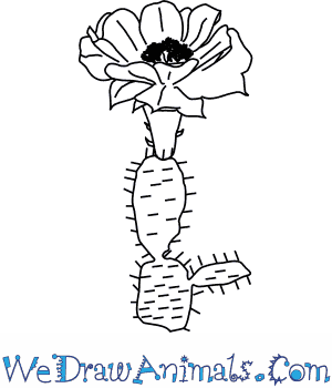 How to Draw a Cactus Flower in 4 Easy Steps
