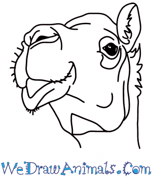 How to Draw a Camel Head in 7 Easy Steps