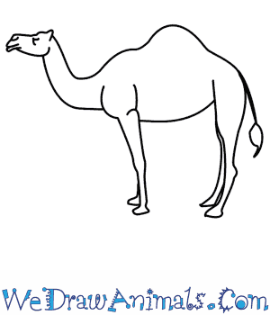 How to Draw a Camel in 7 Easy Steps