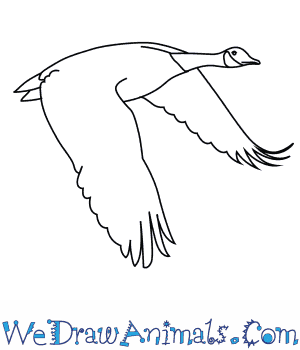 How to Draw a Canada Goose in 6 Easy Steps