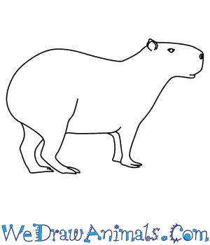 How to Draw a Capybara in 7 Easy Steps