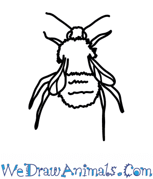 How to Draw a Carder Bumblebee in 6 Easy Steps