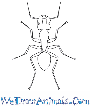 how to draw a carpenter ant